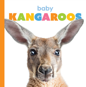 Starting Out: Baby Kangaroos