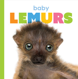 Starting Out: Baby Lemurs