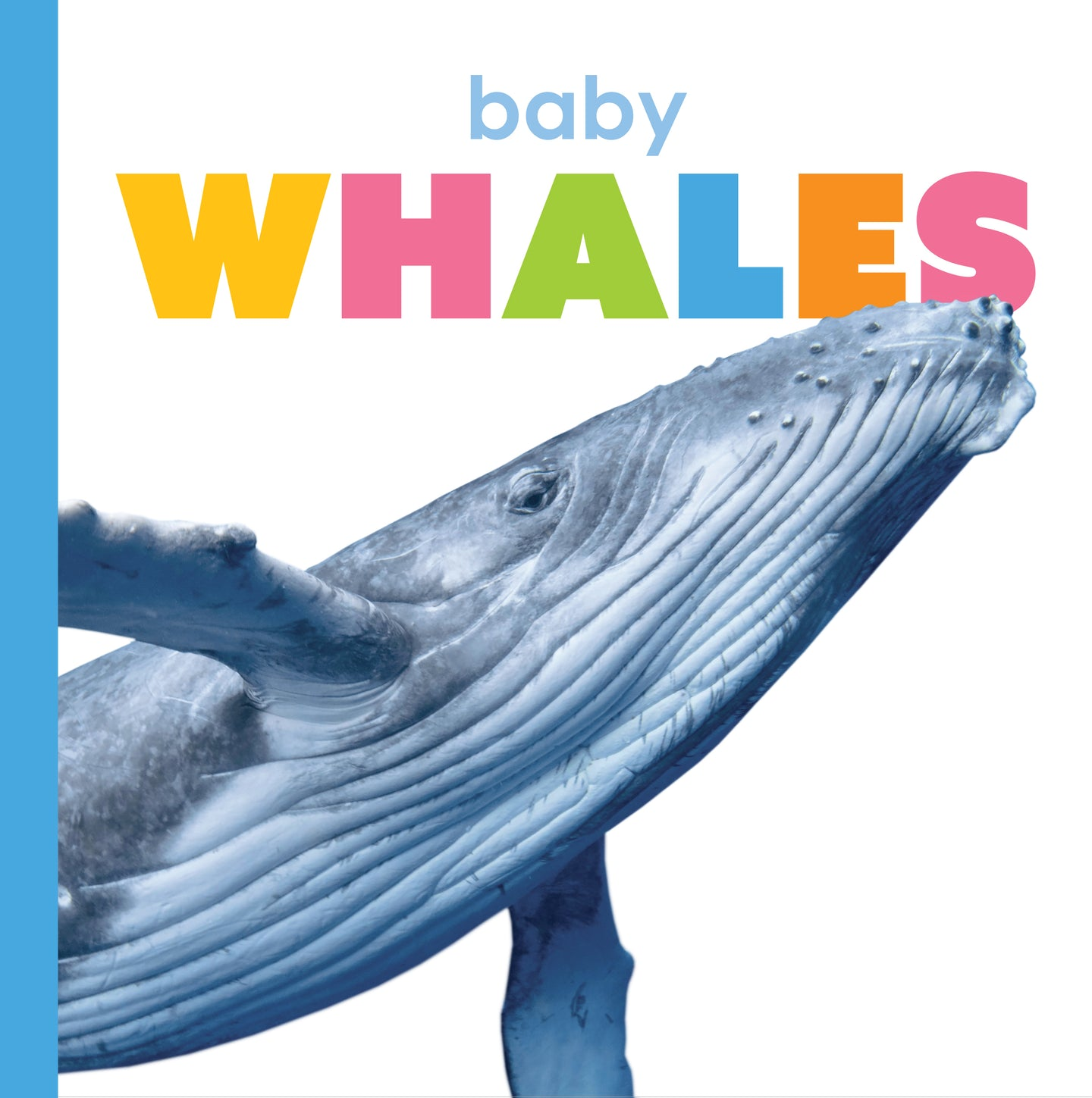 Starting Out: Baby Whales