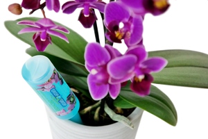Orchideen Elixier Drop by Drop