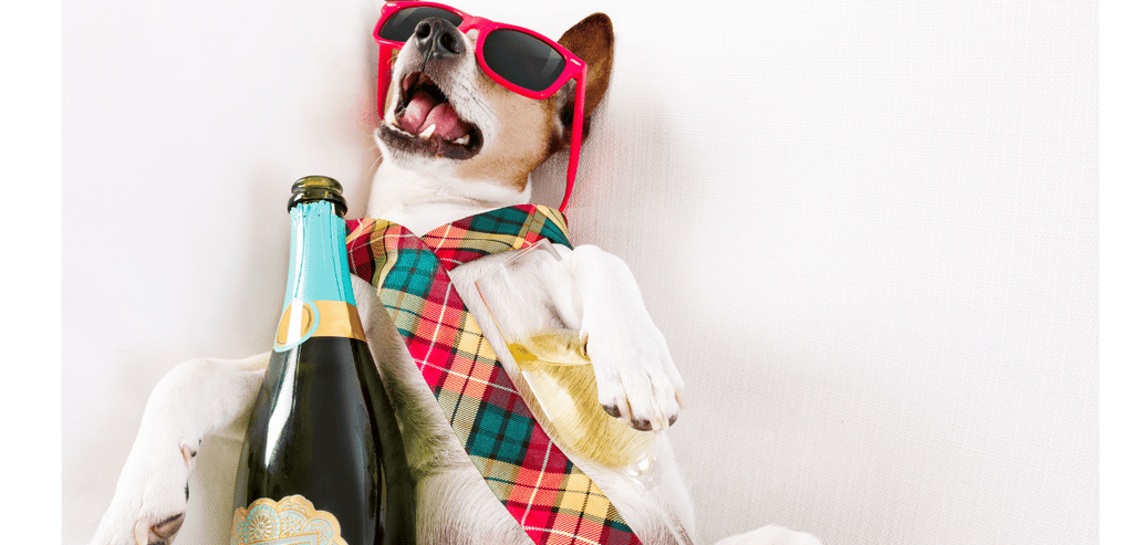 alcool chien chat