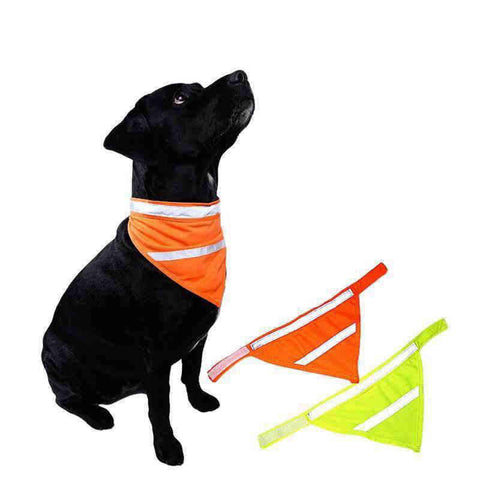 Bandana Chien<br> Fluo - Bandana District