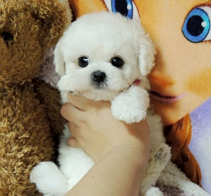 🔥Realistic Teddy Dog Lucky🔥Buy 2 Free Shipping🔥Buy 3 Get 30% Off(Each $13.99)