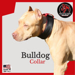 Two Inch Bulldog Collar - Southern Cross Cut Gear