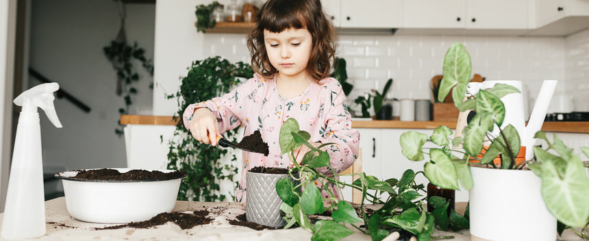 5 easy houseplants that make a great gift!
