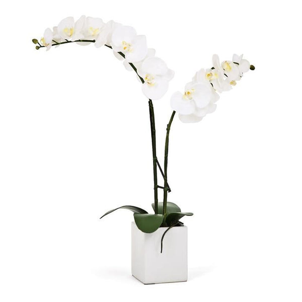 "Orchid Potted Faux Double Stem 23"" - White"