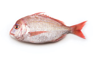 WILD RED BREAM - مرجان حر