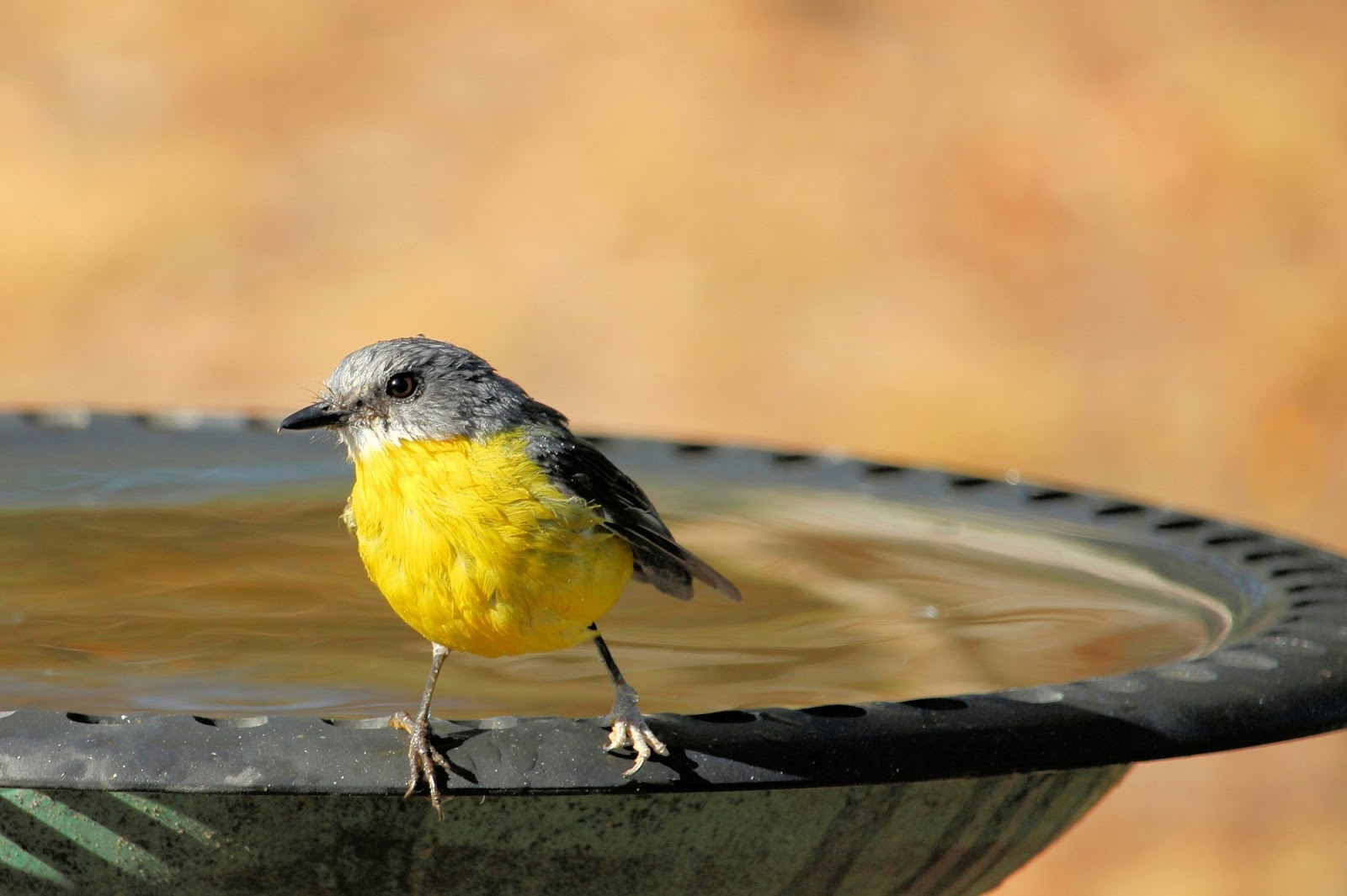 7 Ways a Birdbath Bowl Will Encourage Wildlife in Your Garden