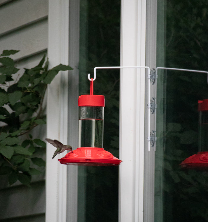 Bring Birds to Your Yard