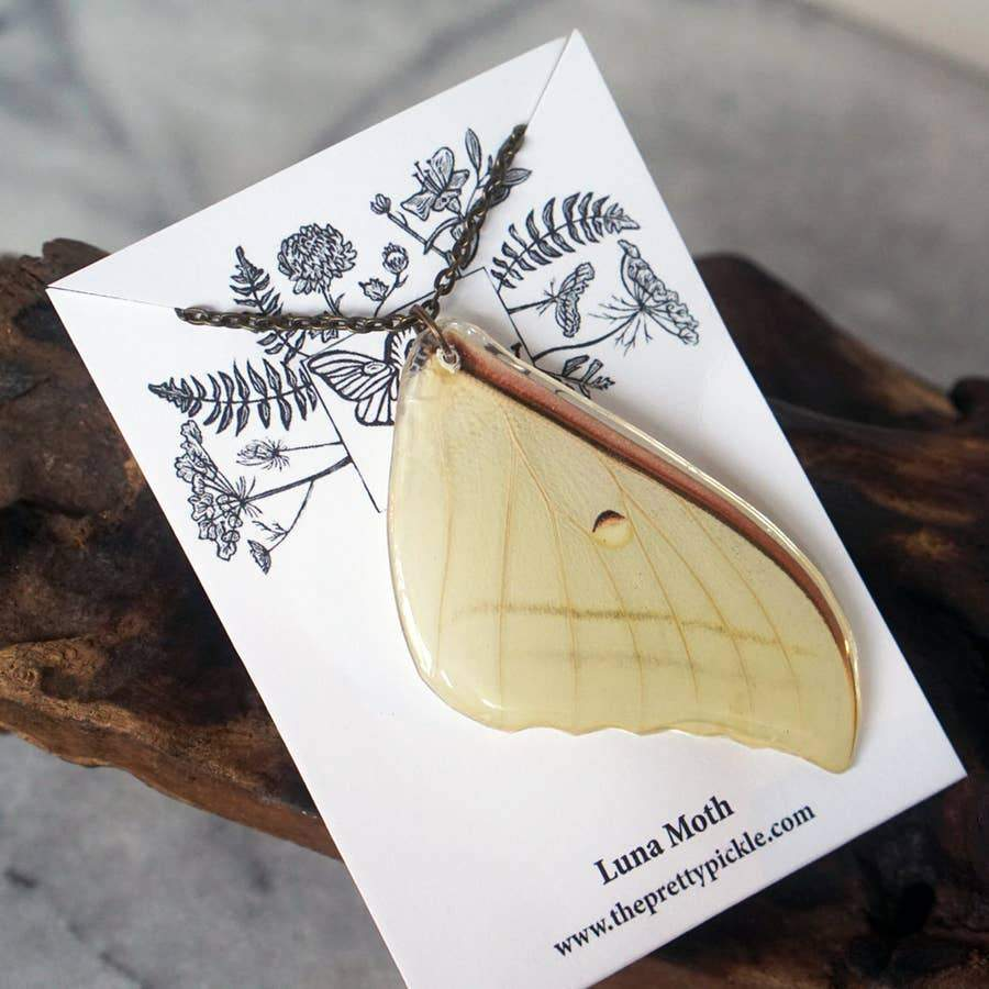 luna moth on backer