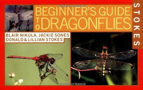 Beginning Guide to Dragonflies