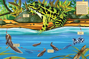 Life Cycle of a Northern Leopard Frog Floor Puzzle