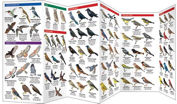 Guide book for Michigan birds