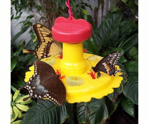 butterfly feeder with swallowtails