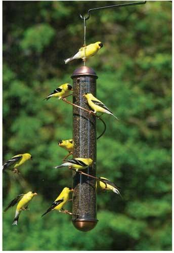 Copper finch feeder