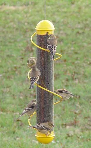Yellow spiral finch bird feeder