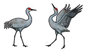 Jabebo sandhill crane earrings