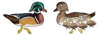 Jabebo wood duck earrings