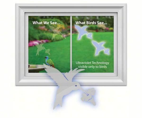 Hummingbird UV window Decal