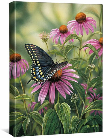 Black Swallowtail Butterfly Gallery Wrapped Canvas