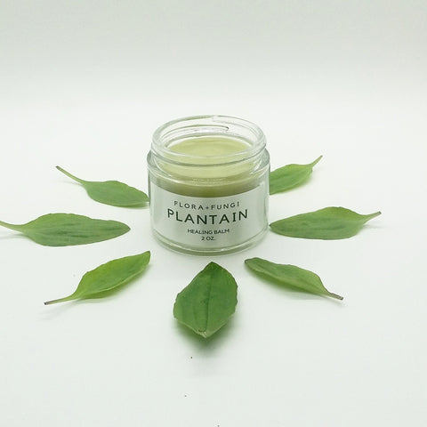 plantain healing balm jar surrounded by plantain leaves