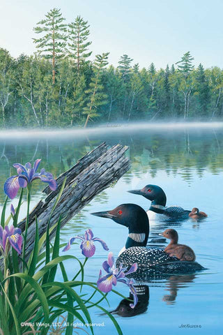 Seasons of Lake; Summer – Loons Art Print