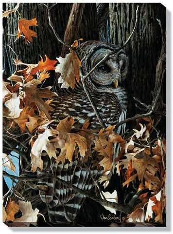 Winter Oaks – Barred Owl Wrapped Canvas Art