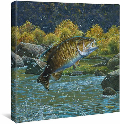 Tail Walking – Smallmouth Bass Gallery Wrapped Canvas