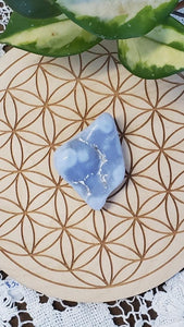 Blue lace Agate Collector Pieces