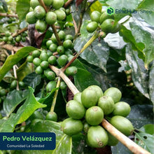 Load image into Gallery viewer, Espresso Specialty Coffee- Pedro Velázquez- EthicHub