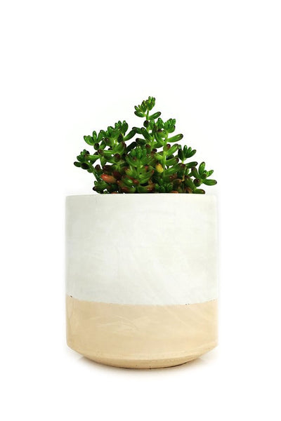 "Blush Flip 6"" Straight Sided Pot"