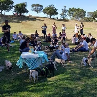 Sydney Pugs Meet Up | 22 DEC
