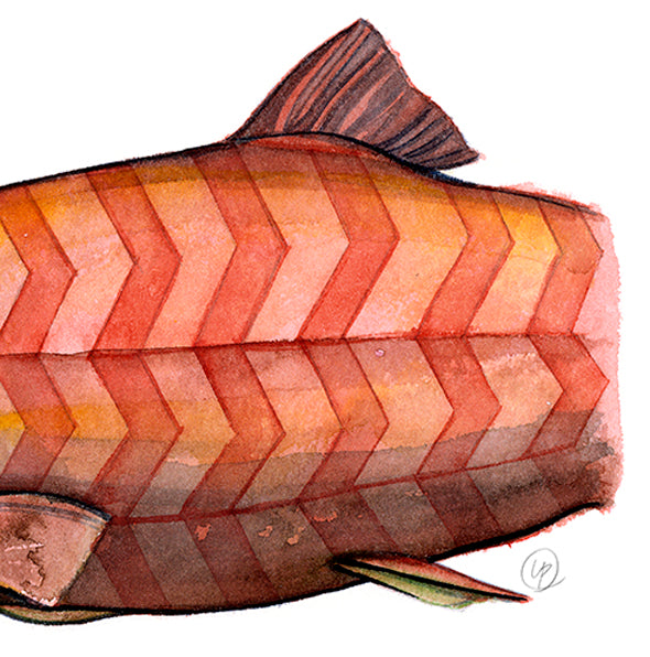 Chevron Salmon - Fine Art Print