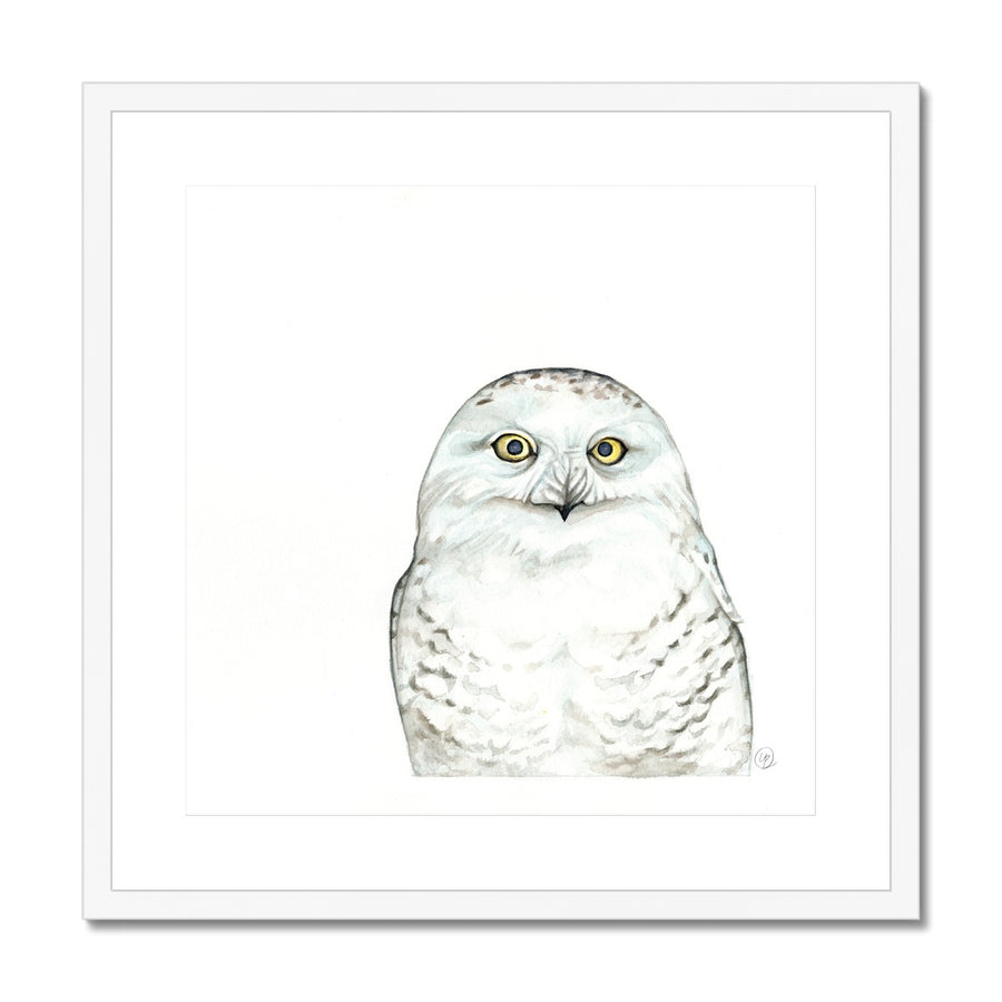 Snowy Owl - Framed & Mounted Print