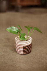 Small Gaseke Basket Planter