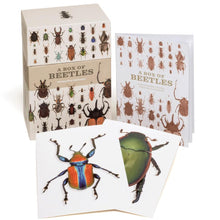Load image into Gallery viewer, A Box of Beetles: Card Set