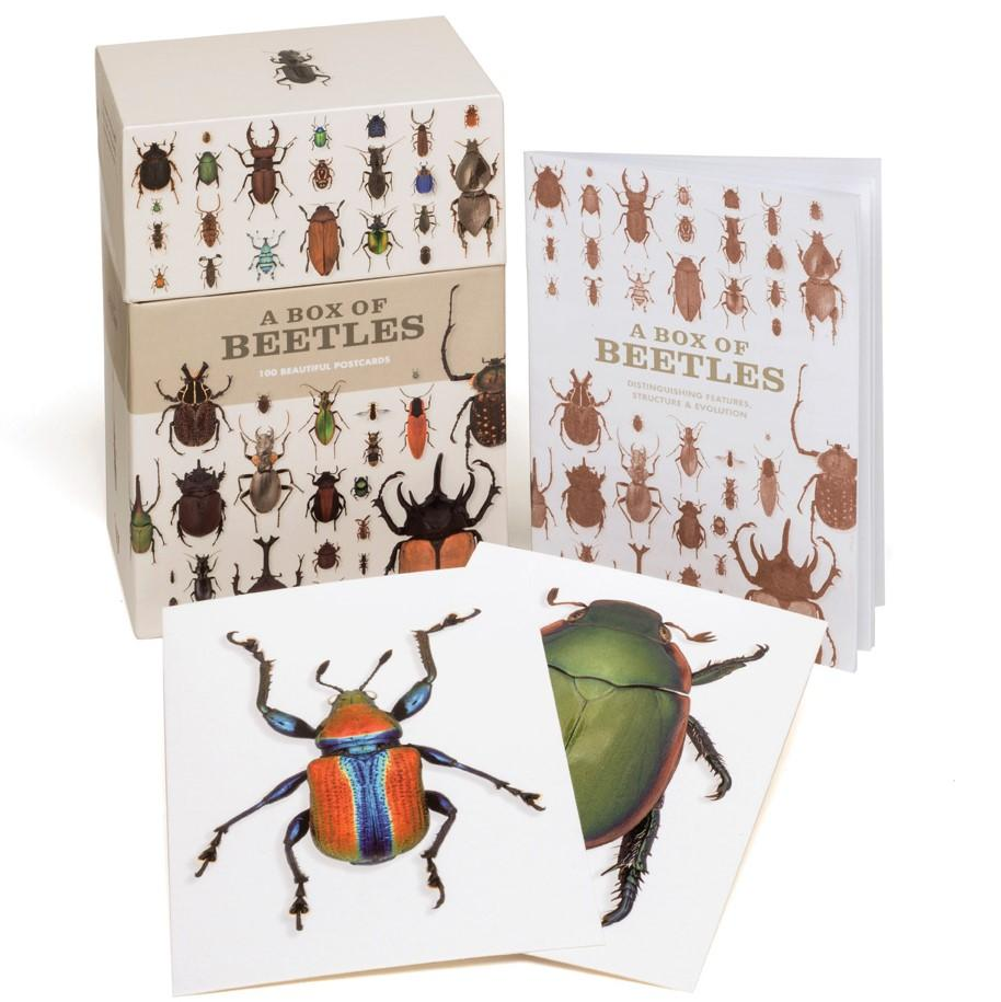 A Box of Beetles: Card Set