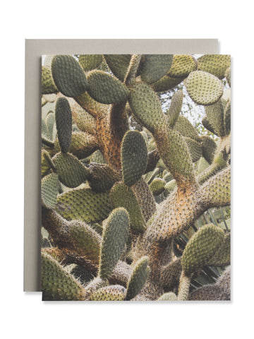 California Cactus No. 4 Card