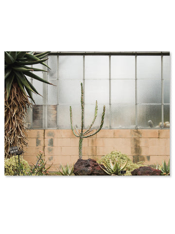 California Cactus No. 1 Printable Poster