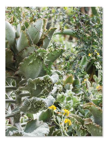 California Cactus No. 2 Printable Poster