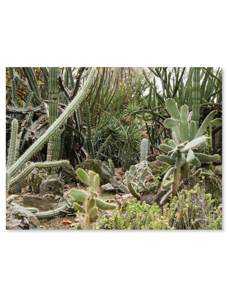 California Cactus No. 5 Printable Poster