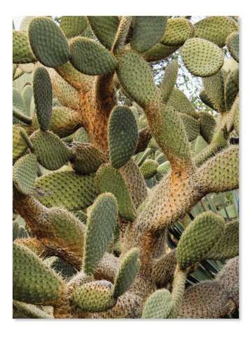 California Cactus No. 7 Printable Poster