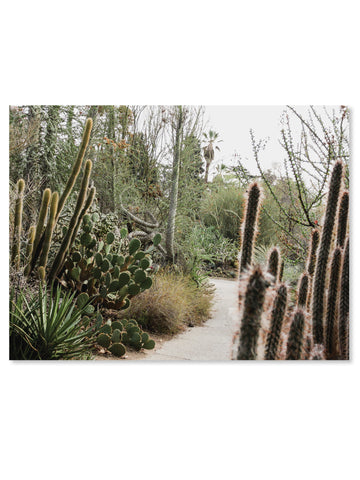 California Cactus No. 8 Printable Poster