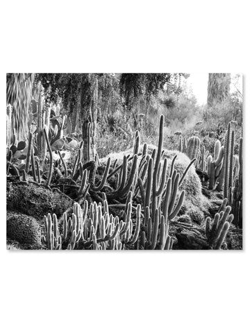California Cactus No. 11 Printable Poster