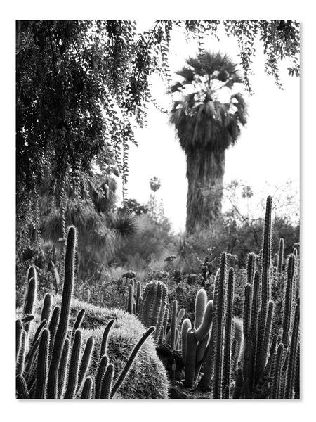 California Cactus No. 12 Printable Poster