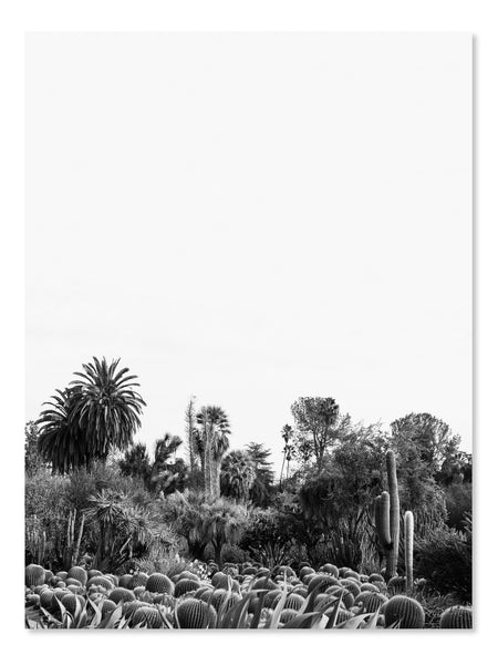 California Cactus No. 13 Printable Poster