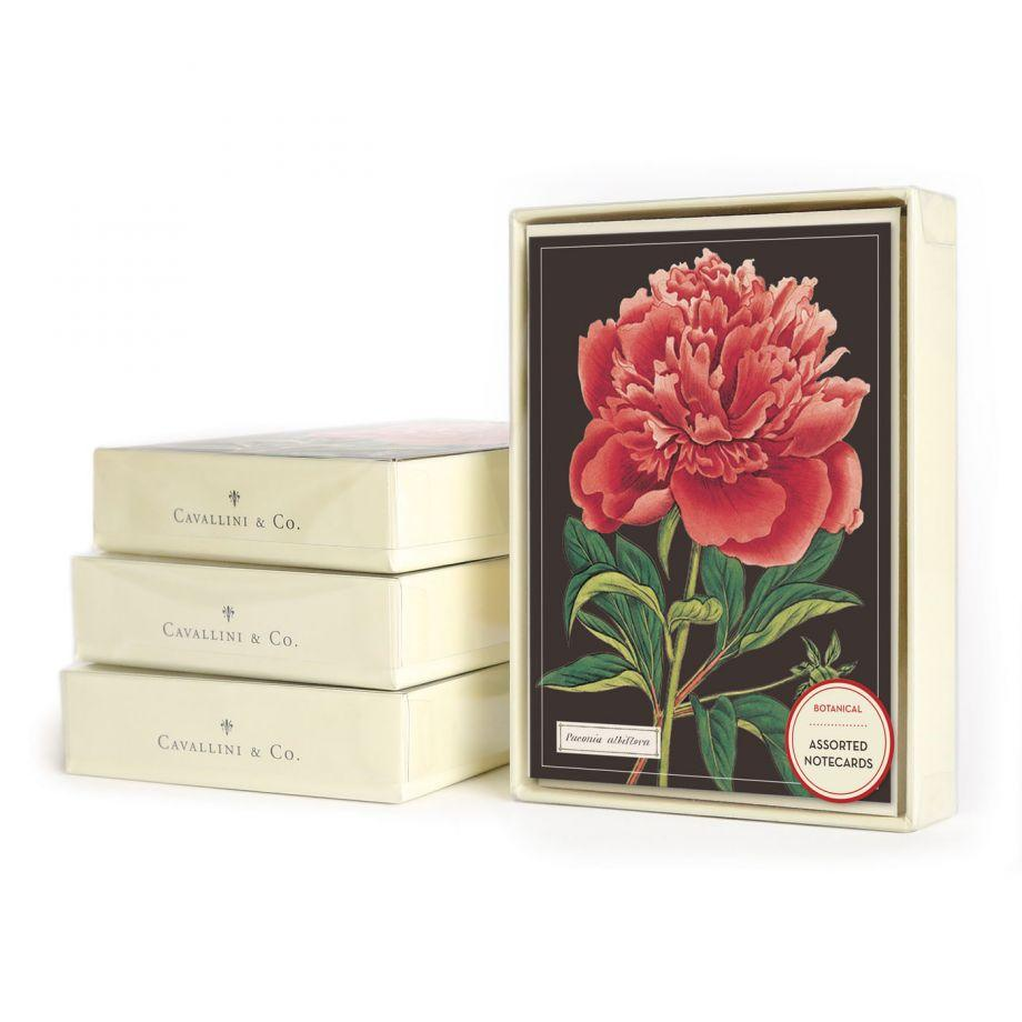 Peony Paeonia Flower Botanica Assorted Notecards Set - Steel Petal Press