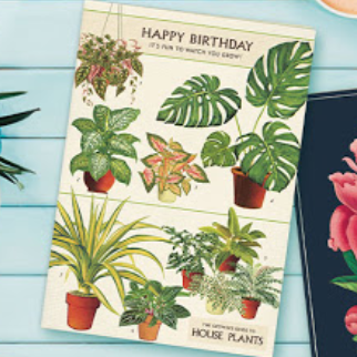 Happy Birthday It's Fun To Watch You Grow House Plants Plant Card - CPC - Steel Petal Press