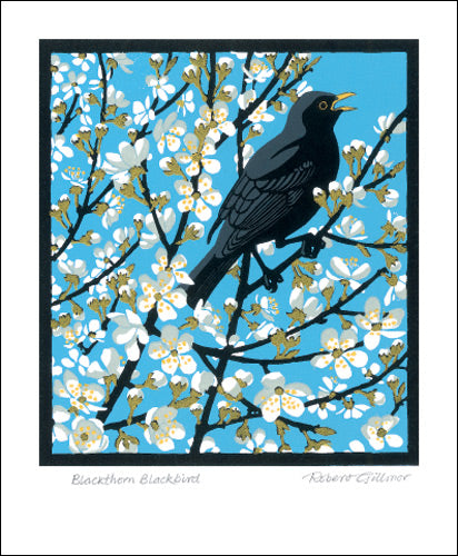 Blackthorn Blackbird Blank Card