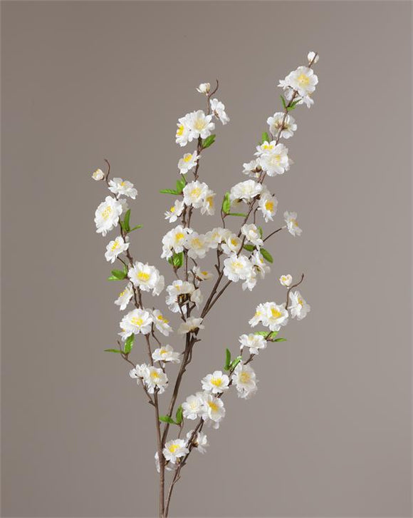 Branch - White Cherry Blossom